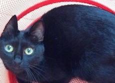 なめちゃいけないネコの癒しパワー 死亡率30%低下の調査も