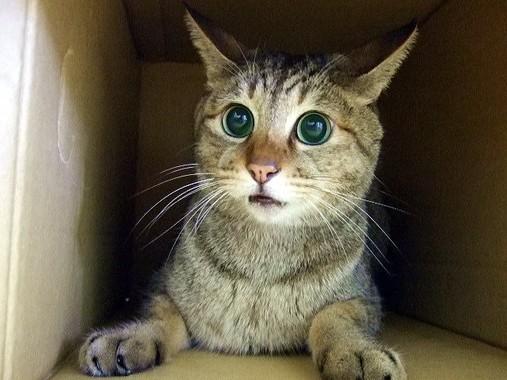 ネコ語がわかれば人とネコはもっとハッピー