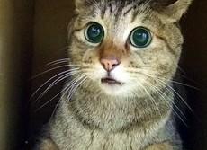 ネコとの会話はこれだけ健康にいい! うつの患者がネコと過ごし明るく改善