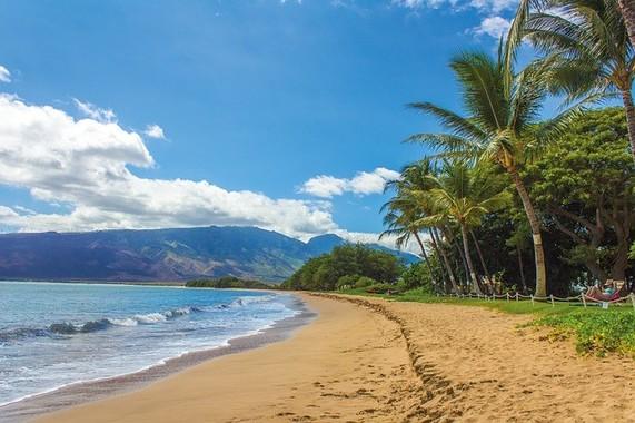 ハワイ土産に寄生虫はいりません…