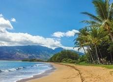 脳や脊髄に寄生虫... ハワイで「広東住血線虫症」が発生中