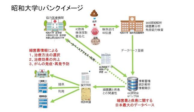 免疫ががんを攻撃するシステムと「昭和大学Uバンク」のイメージ(角田卓也教授提供)