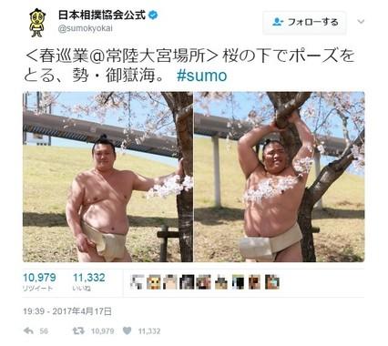 桜の木に寄り添いポーズを決める勢関と御嶽海関(画像使用許諾:日本相撲協会)