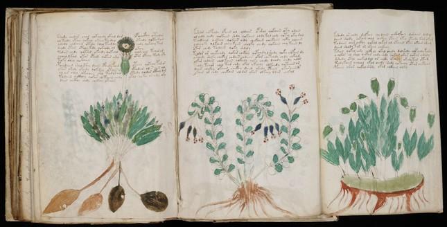 ヴォイニッチ手稿の一部。意味不明な文字と図版が並ぶ