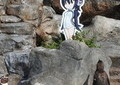 ペンギン、「けもフレ」キャラに恋 東武動物公園グレープが「かわいすぎる」