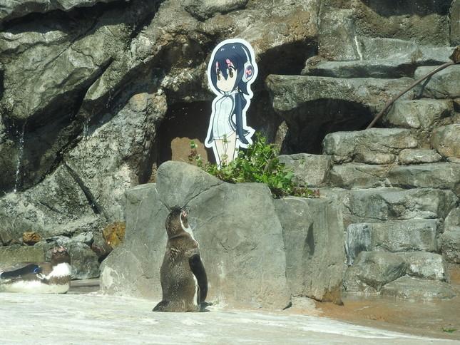 やっぱり、じーーーーーーーーーーっと見ている(東武動物公園提供)