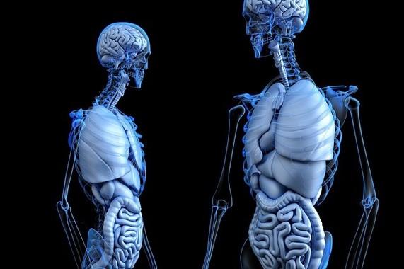 肺の中に直にカメラを挿入する「肺カメラ」