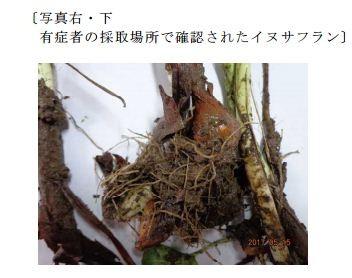 臭いと茎の色は要確認