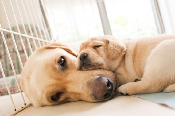 可愛いあまり犬のニオイに気づかない?
