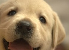 犬は赤ちゃん言葉で話されるのが好き? 実験で喜ぶのは子犬だけ、成犬は...