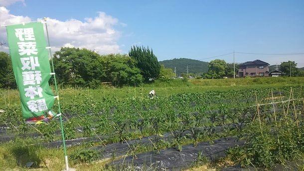「収穫体験&食べ放題」が行なわれる畑(神戸ブルーベリーフィールドの発表資料より)