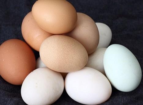 卵は発育不全の改善に効果が示された