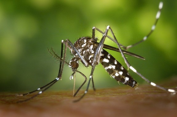 虫よけを正しく使って蚊対策を