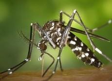 「虫よけ」なのに蚊に効かない? きちんと効果のある商品を見極める方法は