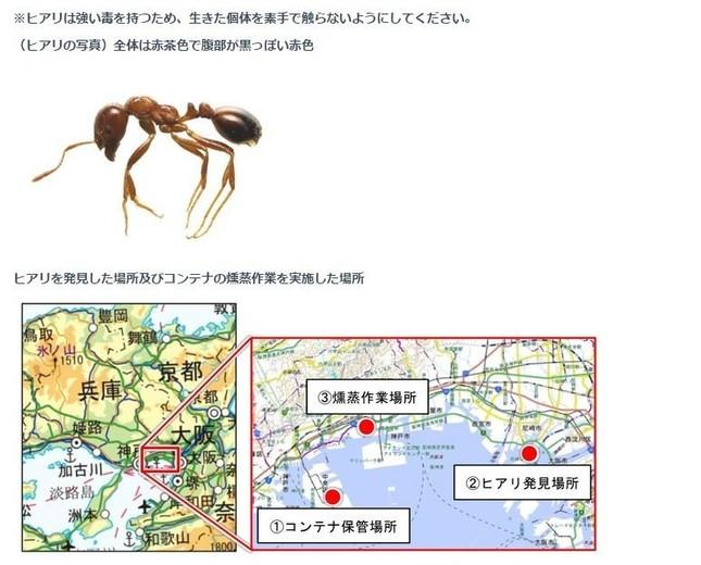 強毒アリを確認したら要注意(画像は環境省ウェブサイト上の報道発表より)