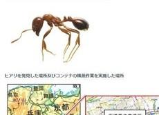 猛毒、凶暴な昆虫が日本に続々侵入 「ヒアリ」刺すとアナフィラキシーの恐れ