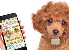 犬専用ウェアラブル端末「いぬのきもち お散歩Time」秋に発売
