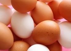 卵アレルギーは乳児から少量食べて予防 学会が180度の方針転換