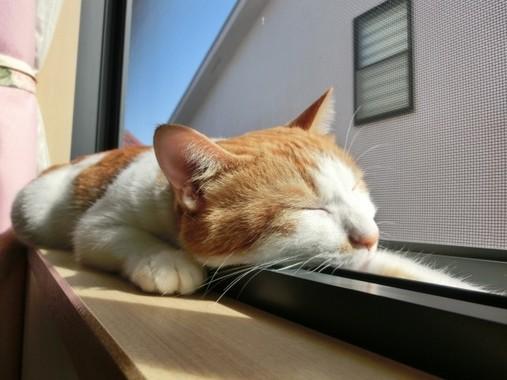 猫は涼しいところを探すのが得意だ