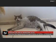 トルコの野良猫、難産で苦しむも なぜか人間の病院に来て無事子猫を出産