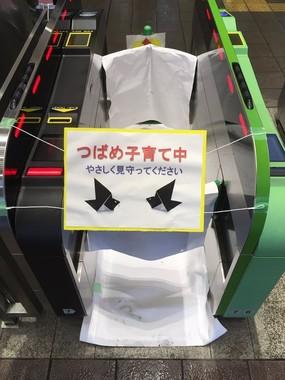 閉鎖されたJR鎌倉駅の改札機(写真はコペハ鳥@Cphg_mbさん提供)