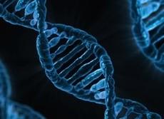 「健康に悪い遺伝子の変異」が知能を下げる 英大学が発表