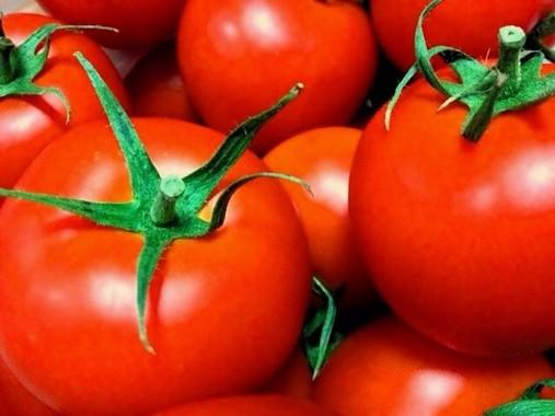 可愛い顔だが意外に怖いトマト