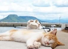 猛暑到来!ペットの「夏バテ」対策はこれだ ニャンは「毛玉」、ワンコは「冷房病」に注意