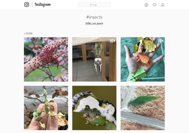 インスタで「#insects」と検索すると…