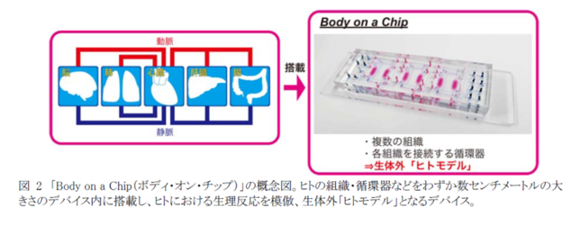 「ボディ・オン・チップ」の仕組み(京都大学の発表資料より)