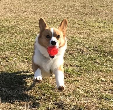 公園で遊ぶ時は特に注意を