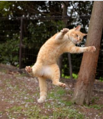 ニャンコはいつまでも元気で。図は人・犬・猫の「善玉菌」(東京大学などの発表資料より)