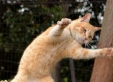猫の腸内細菌の「善玉菌」が判明 ペットフードの開発でより健康長寿に
