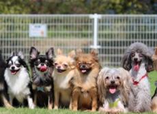 世界初!犬のがん「免疫療法薬」開発 北大などが臨床試験成功、効果は人間並み