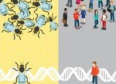 ミツバチにも「自閉症」のハチがいる 人間の自閉症と共通の遺伝子が判明