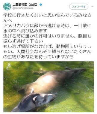 上野動物園が投稿したメッセージ(ツイッターより)