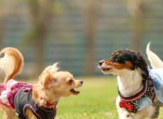 犬猫の1割はマダニにかまれている! ペット保険の調査で身近な危険判明