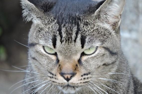 野良猫の糞尿に悩む人は多い