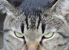 猫の尿は猫の尿で防ぐ!  猫の糞尿被害防止策を岩手大が発見
