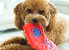 どうして犬は飼い主の靴下が大好き? いたずらワンコの問題解決に驚きグッズ