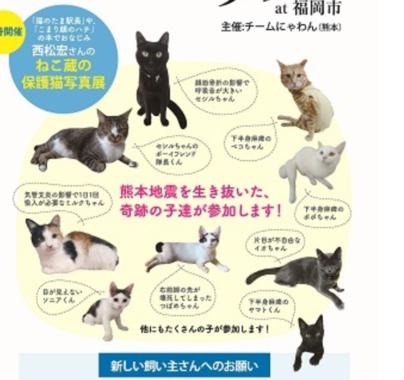 譲渡会に参加する「奇跡の猫たち」(「チームにゃわん」の発表資料より)