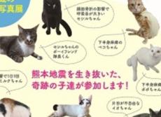 熊本地震を生き残った「奇跡の猫」たち 障害を持つ猫限定の譲渡会が福岡で