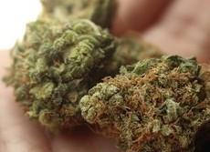 大麻で痛みやPTSDを緩和することはできない 米退役軍人省、退役兵らに注意喚起