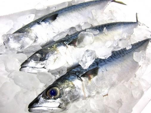 魚を食べるとうつ病の予防に