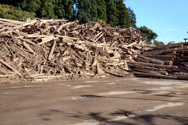 うず高く積まれた流木だが、処理されたのはごく一部にすぎない