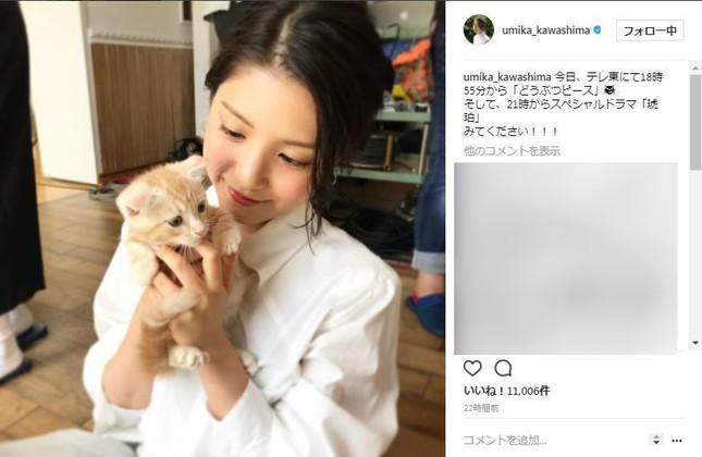 川島さんと子猫のツーショット(画像は川島さんのインスタグラムより)