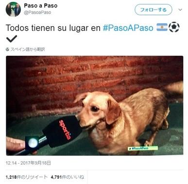 インタビューに応じる乱入犬(画像は@PasoaPasoのツイートより)