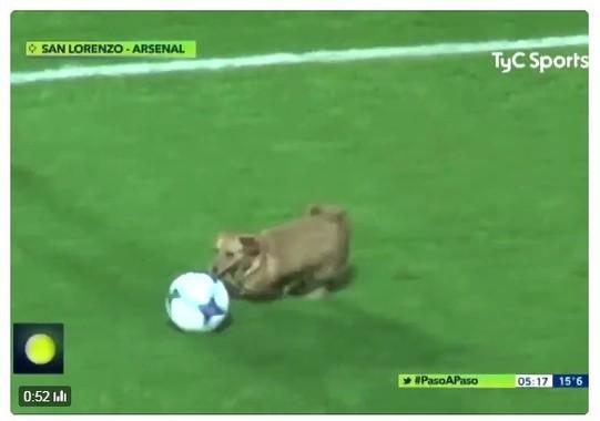 犬がピッチに乱入…!(画像はTyC Sports公式ツイッターの投稿動画より)