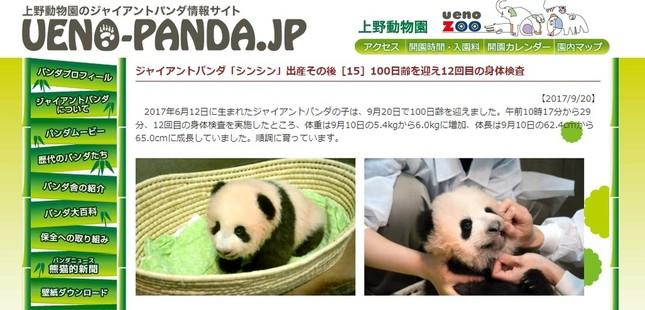 100日齢を迎えた赤ちゃんパンダの名前が「香香」に決まった(画像は上野動物園ジャイアントパンダ情報サイトより)