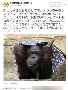 「ジプシー」の訃報(画像は多摩動物公園の公式ツイッター)